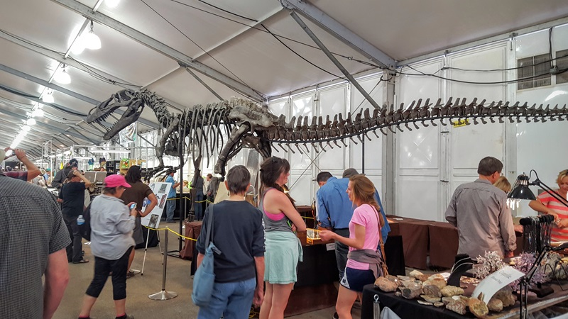 22nd Street Show has some very LARGE displays! It was hard to get this entire life sized Torvosaurus in the frame!