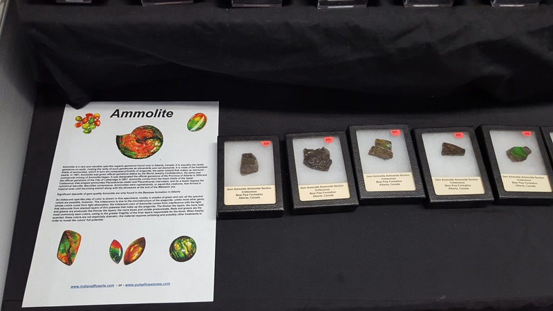 Ammolite is the stunning rainbow surface of the fossil Ammonite...