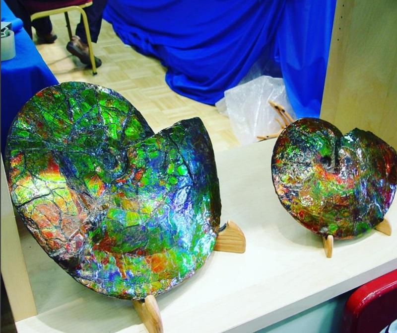 Ammolite and fossils at the JOGS Show.
